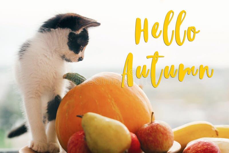 Hola texto del otoño, concepto de la tarjeta de felicitación de las estaciones Caída agradable s imagen de archivo libre de regalías