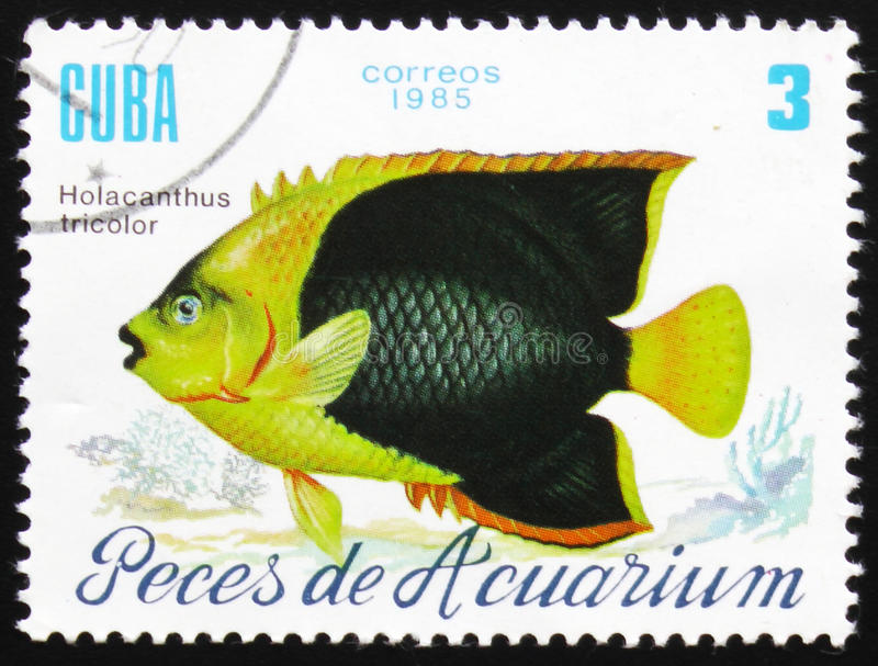 Holacanthus tricolor, the series `Aquarium fishes`, circa 1985 royalty free stock images