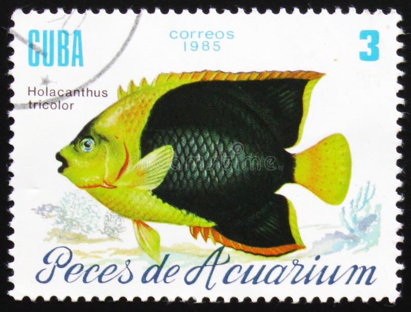 Holacanthus-Trikolore, das Reihe ` Aquarium fischt `, circa 1985 lizenzfreie stockbilder