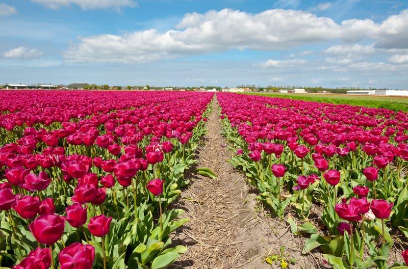 Holanda imágenes de archivo libres de regalías