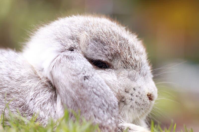 A Holanda do bebê poda o coelho no parque imagens de stock royalty free