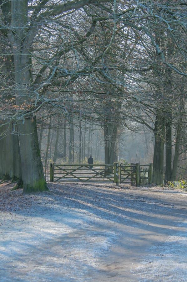 Holandie - De Bilt fotografia royalty free