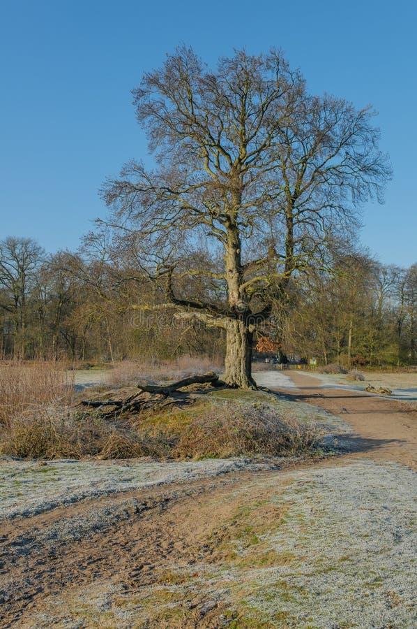 Holandie - De Bilt obraz royalty free