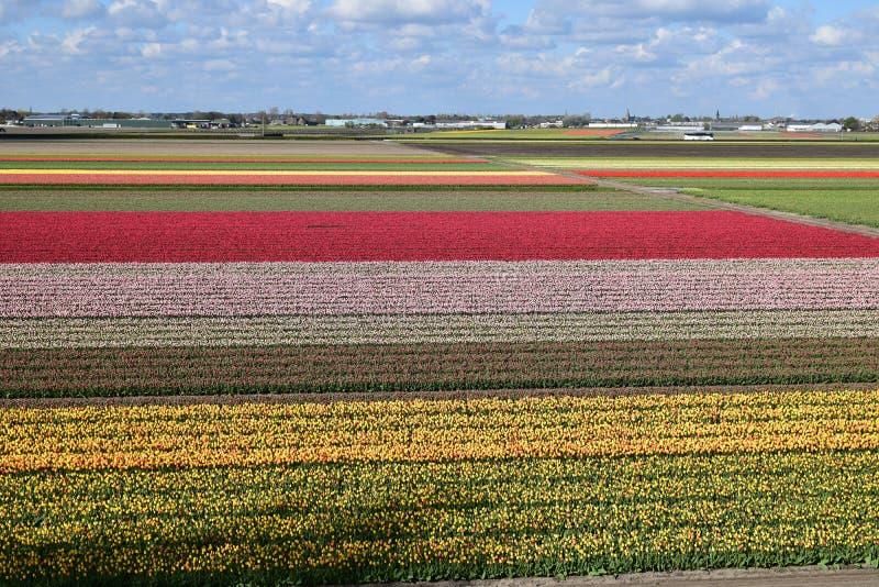 Holandie Keukenhof zdjęcie stock