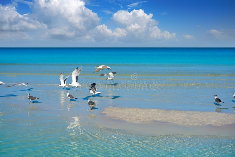 Holbox Island turquoise in Quintana Roo Mexico. Holbox Island turquoise beach in Quintana Roo of Mexico royalty free stock images
