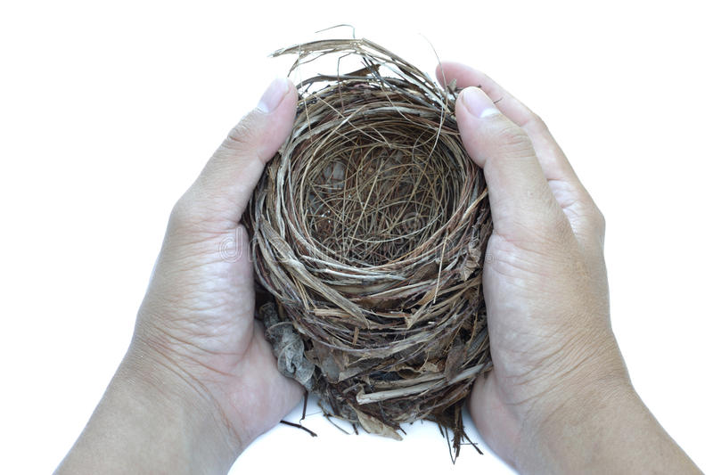 Download Hold nest stock photo. Image of cozy, round, invest, gift - 20732232