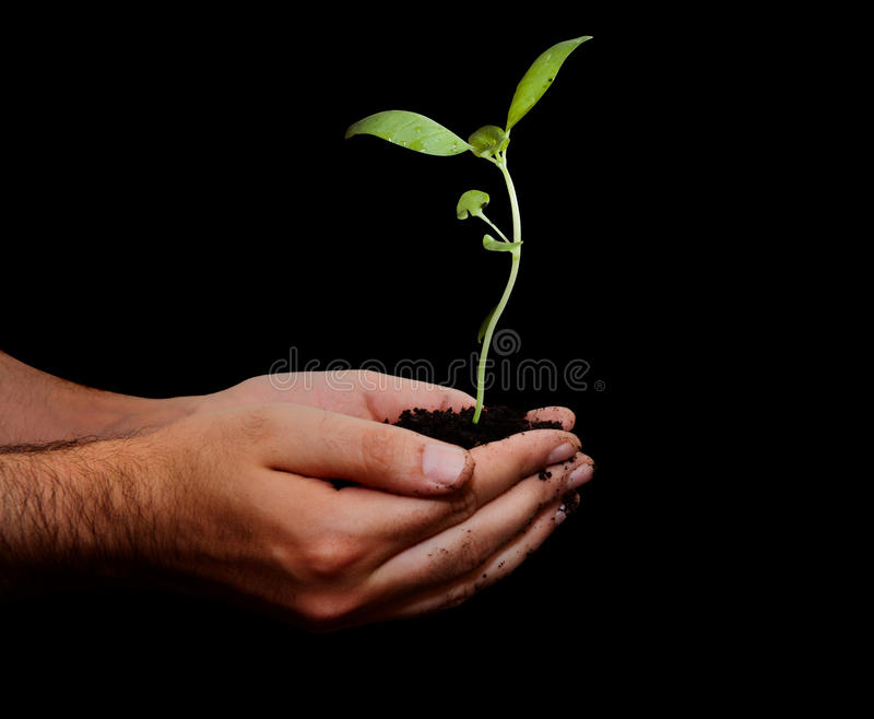 Hold new life. Hand that holds new life stock photo