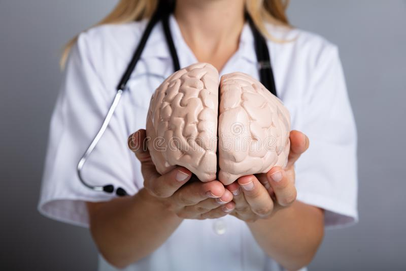 Holding医生人脑模型 库存图片