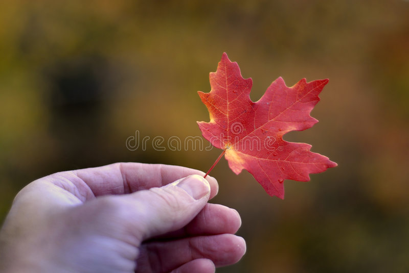 Download Holding Autumn Leaf Royalty Free Stock Photo - Image: 3309265