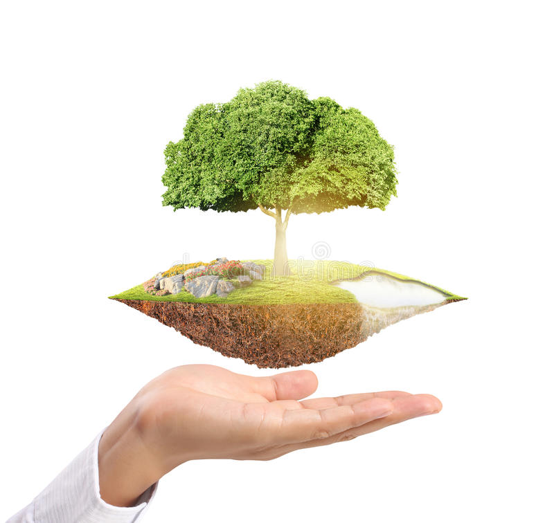 Holding big tree sprouting. Businessman holding big tree sprouting stock image