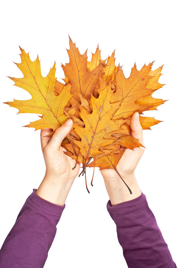Download Holding a bunch of leaves stock photo. Image of setting - 11664288