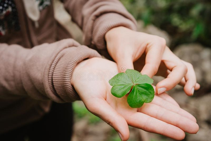 Holding a clover leave on the stretched female hand palm stock photography