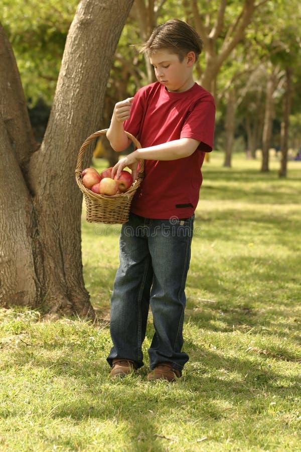 holding för äpplekorgbarn arkivbilder