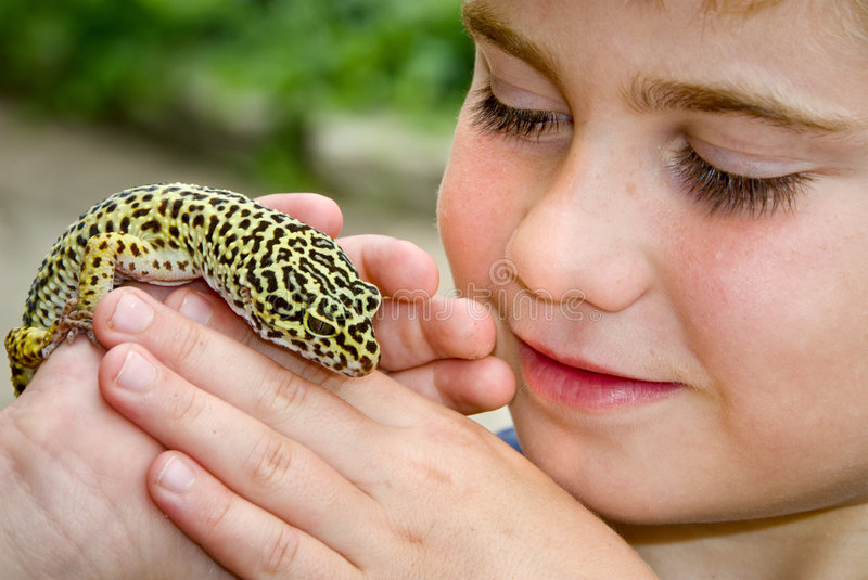 Holding Gecko royalty free stock photos
