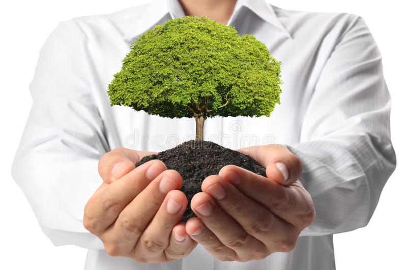 Download Green tree in hand stock image. Image of hold, delicate - 29861747