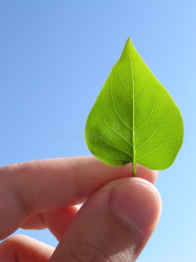 Holding a leaf stock images