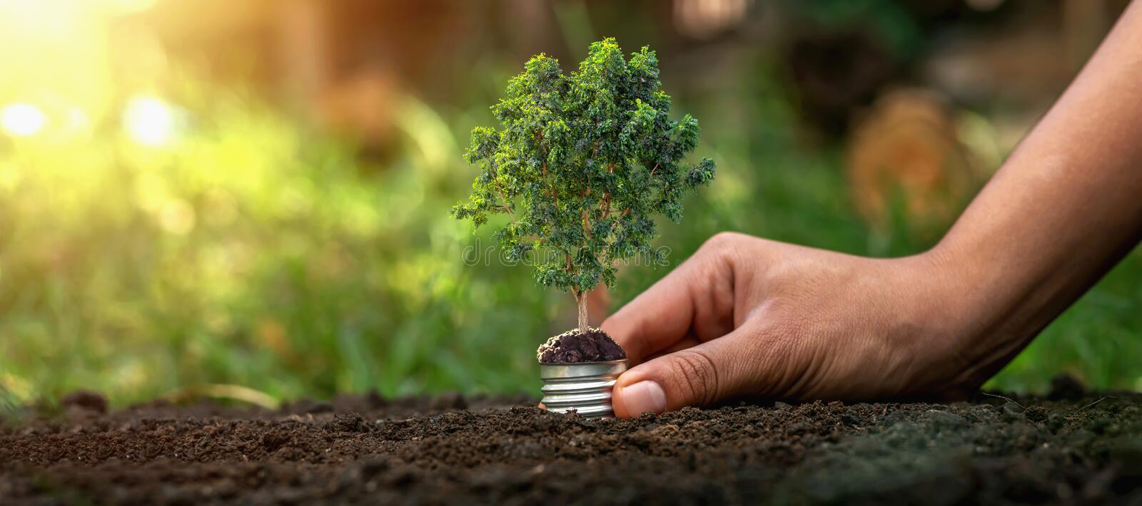 Holding a light bulb on a green tree on the background, natural energy saving concept stock photography