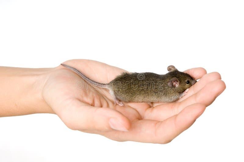 Holding Mice stock image