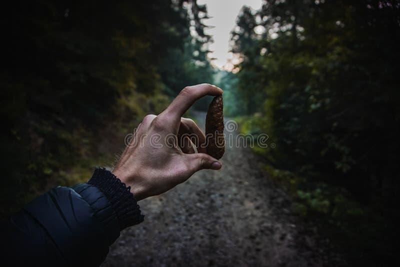 Holding pinecone stock photos