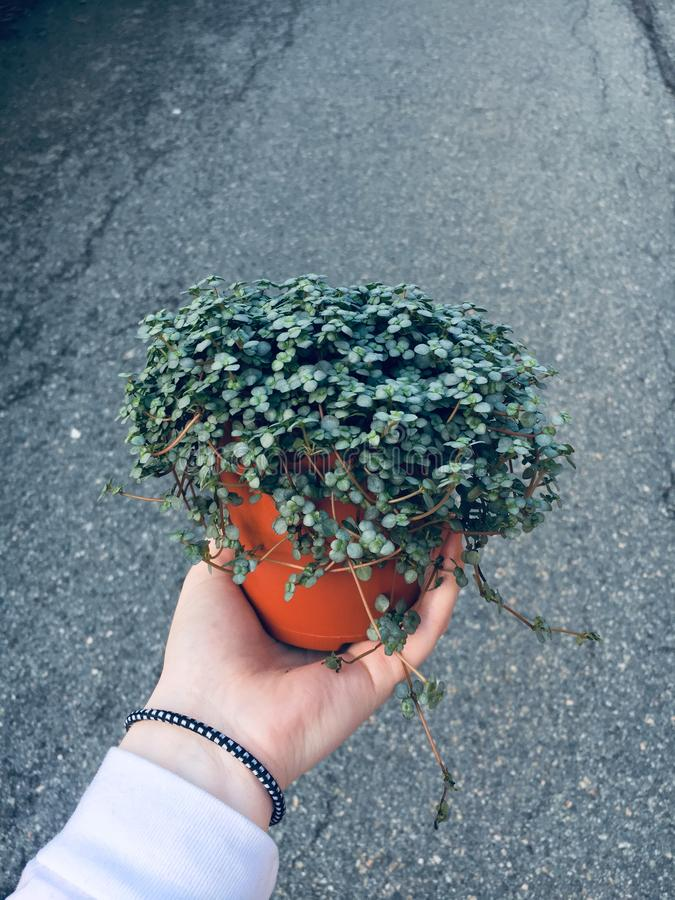 Holding a plant stock photography