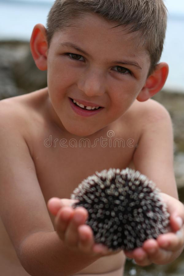 Holding sea urchin royalty free stock image