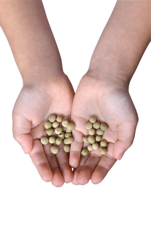 Download Holding Seeds stock image. Image of birth, farm, agriculture - 2139511