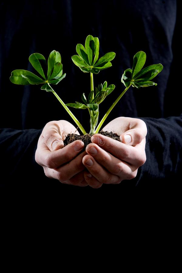 Holding small plant stock photography