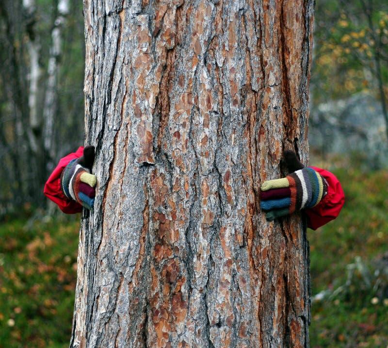 Holding a tree stock photo