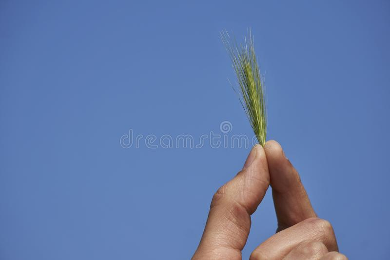 Holding green plant in hand against blue sky background, sustainability ecology concept royalty free stock photo