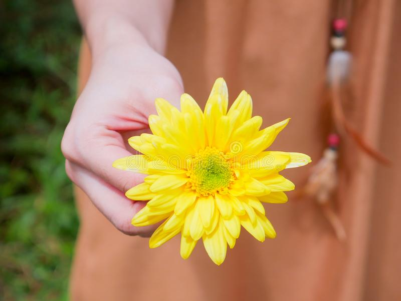 Holding a yellow Chrysanthemum flower in a hand. Holding a beautiful yellow Chrysanthemum flower in a hand stock photo