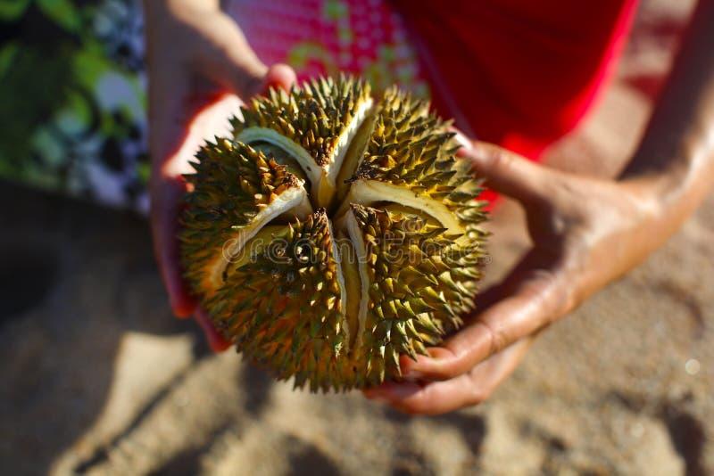 Download Holdingen För Durianmutterfrukt I Händer Som är Spruckna öppnar Arkivfoto - Bild av ripen, moget: 27275618