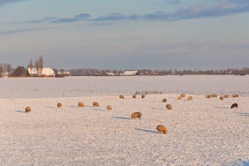 holendera krajobrazowa cakli śniegu zima zdjęcie stock