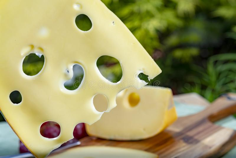 Holendera Maasdam ciężki ser z dziurami, kawałek i pokrajać, słuzyć plenerowego w zieleń ogródzie obraz stock