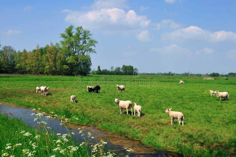 holendera pastoralny krajobrazowy fotografia stock