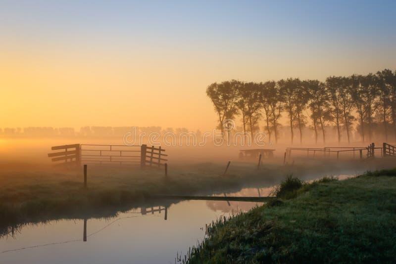 Holenderska łąka w mgłowym zmierzchu obrazy royalty free