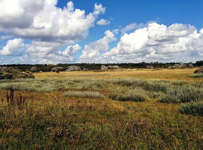 Holenderski diuna krajobraz zdjęcia royalty free