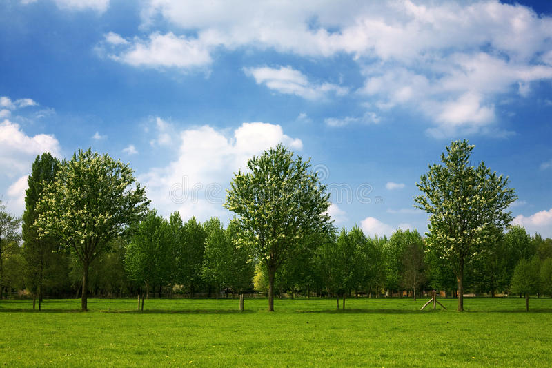 Holenderski lato krajobraz zdjęcia royalty free