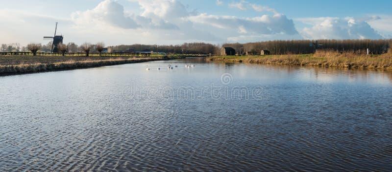Holenderski polderu krajobraz z łabędź i młynem obraz stock