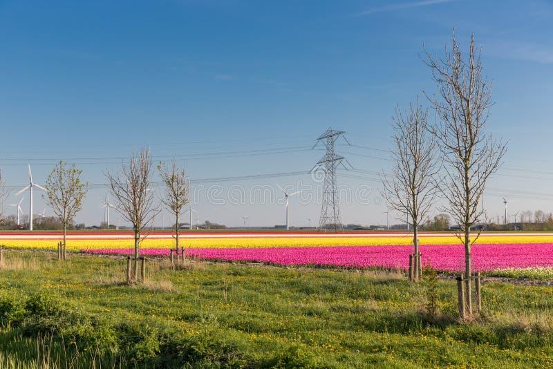 Holenderski tulipanu pole z silnikami wiatrowymi i władza pilonem fotografia royalty free