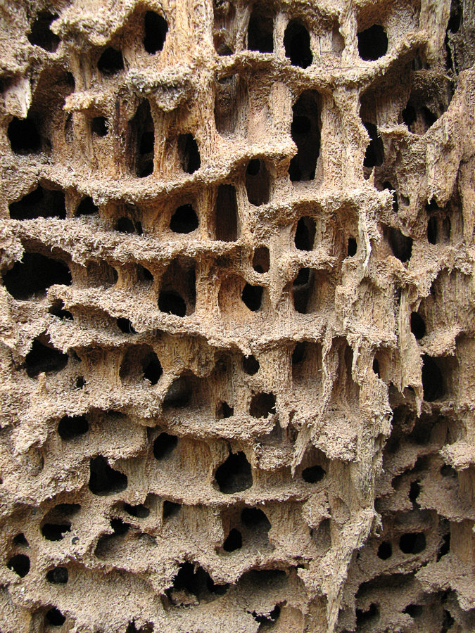 Holes in wood stock photography