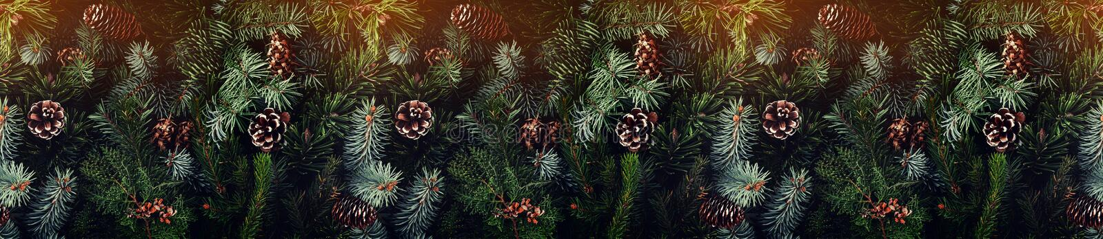 Holiday background of Christmas tree branches, spruce, juniper, fir, larch, pine cones with light. Xmas and New Year theme. Flat lay, top view, wide royalty free stock image
