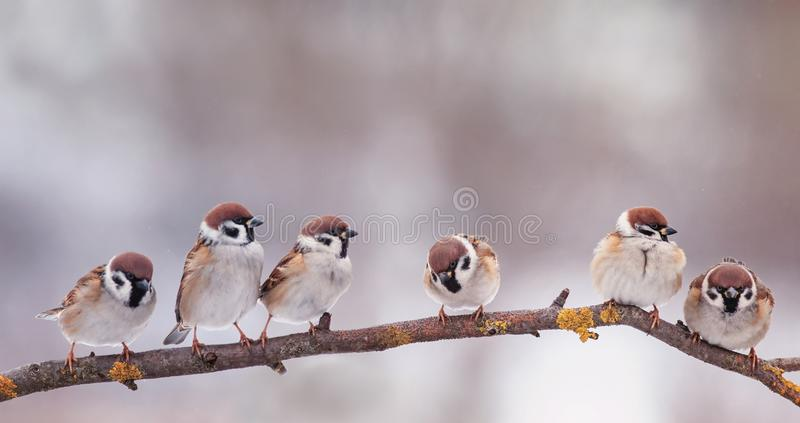Card with many little funny birds sparrows sitting in Sunny garden on a branch in the spring. Holiday card with many little funny birds sparrows sitting in Sunny stock photos