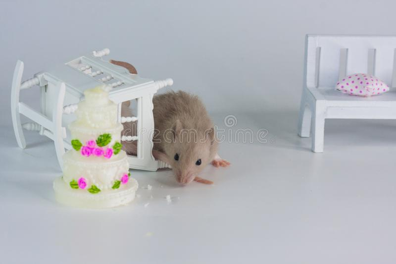 Holiday concept. Mouse on the background of the cake. stock images