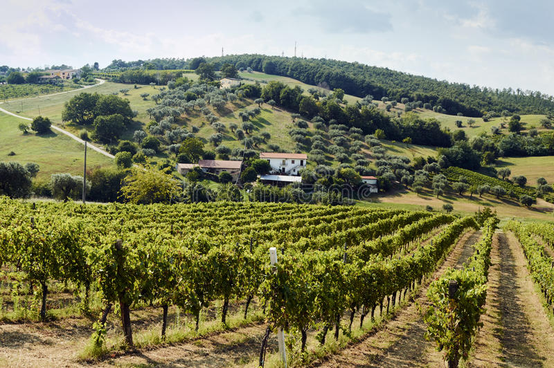Holiday in the countryside on the hills, visiting the vineyards of pallagrello, typical and valuable wine produced in royalty free stock photography