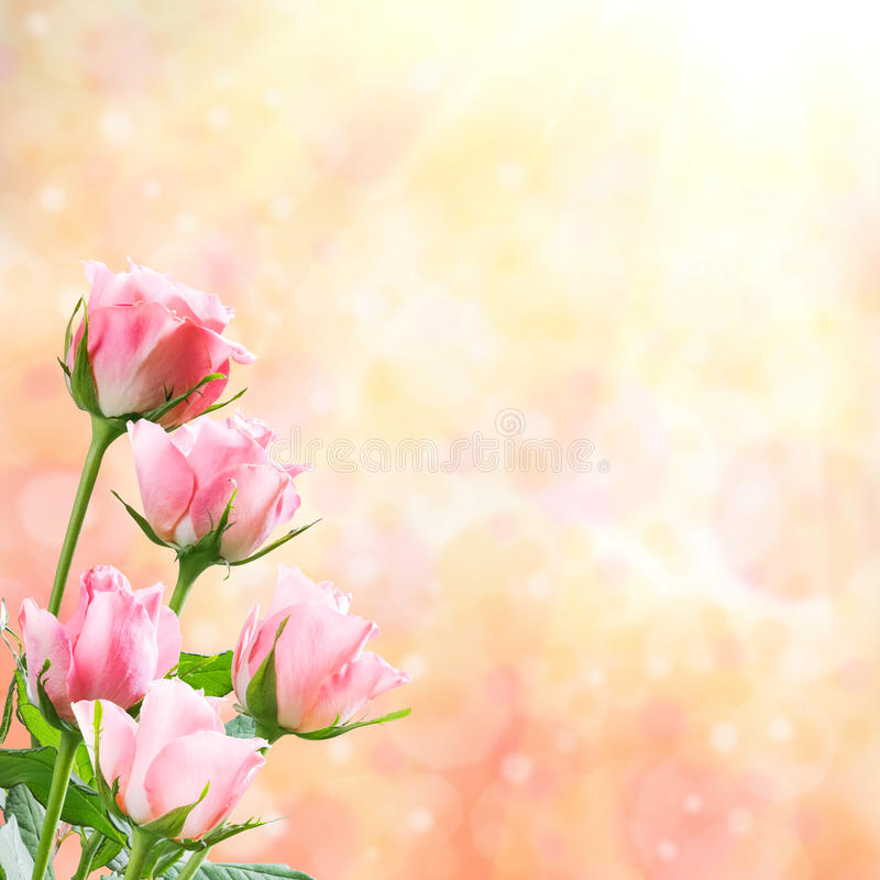 Holiday Nature Floral Background stock images
