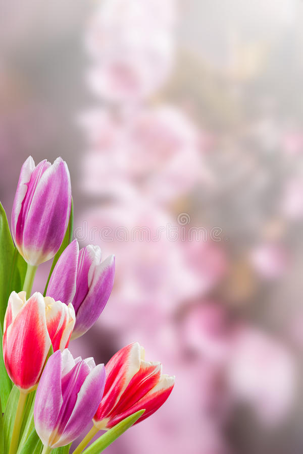 Holiday Nature Floral Background royalty free stock images
