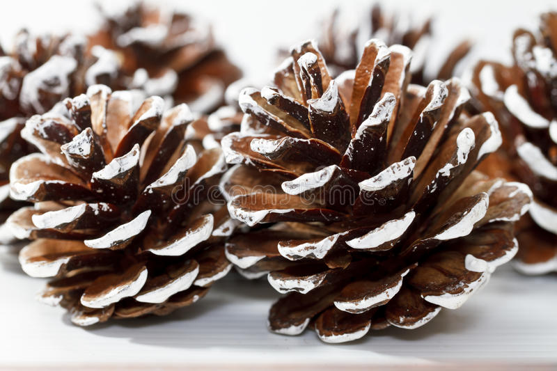 Download Holiday Pine Cones stock photo. Image of many, cone, painted - 19315970