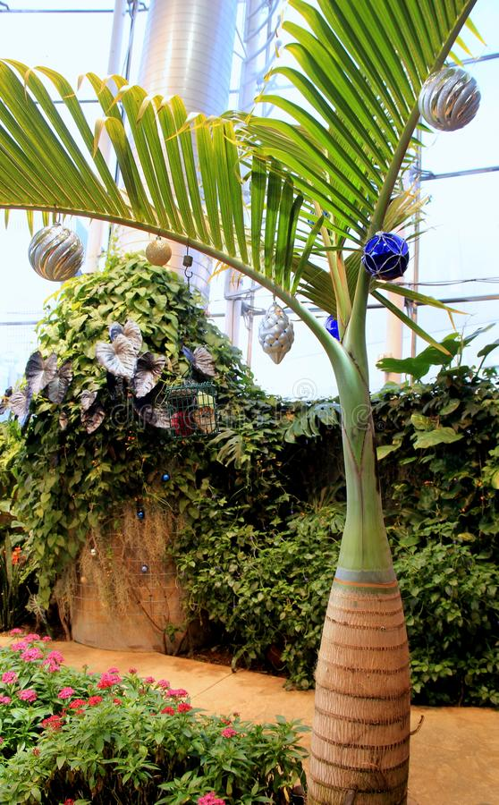 Holiday setting with tropical trees and exotic orchids making way for Christmas, Dancing Wings Butterfly House, Strong Museum, NY. Pretty image of tropical trees stock photo