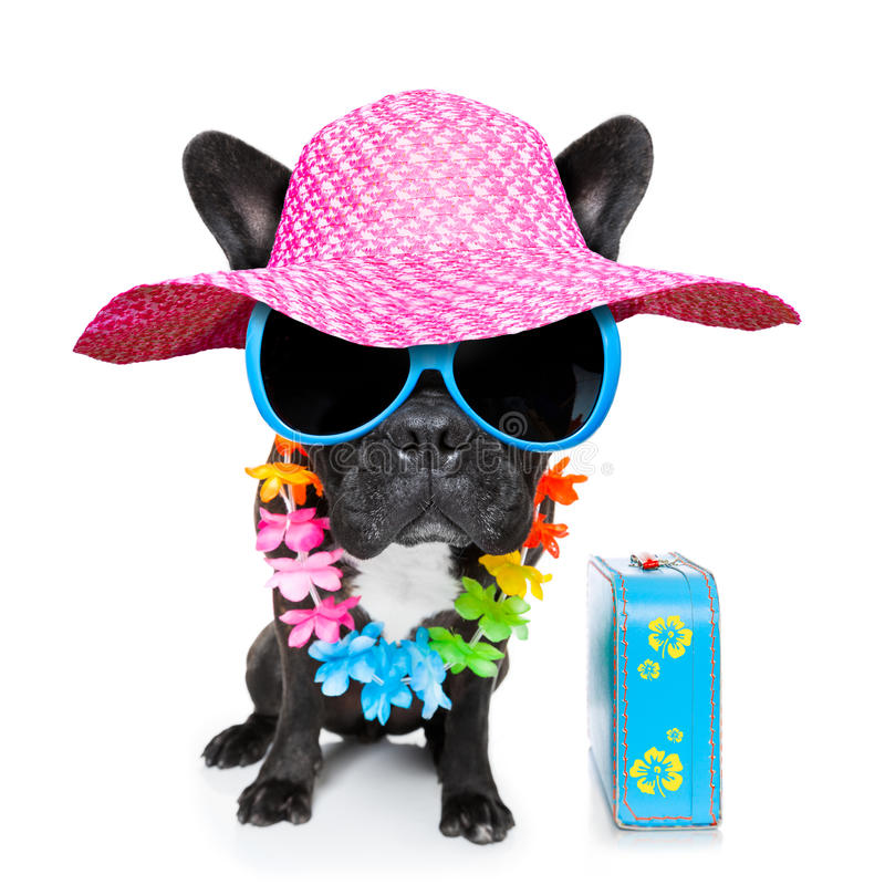 Free Holiday Summer Dog Royalty Free Stock Images - 39808159