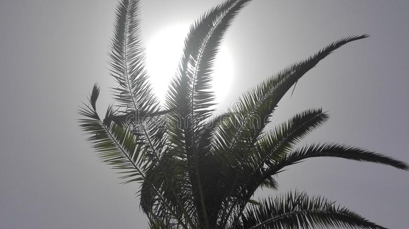 Holiday themes - Palm tree in full sun - sky view from the palm tree. Holiday themes - relaxation. Palm tree in full sun - sky view from the palm tree royalty free stock photography
